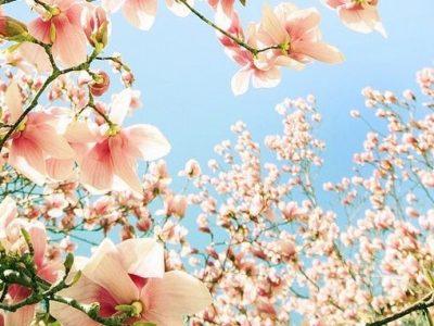 Formation Fleurs de Bach Niveau 2 en ligne