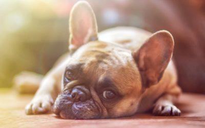 Les émotions chez l'animal, leur impact sur leur santé