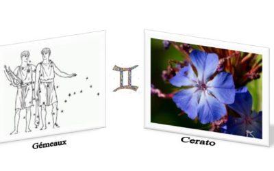 Cerato et le signe du mois: les Gémeaux