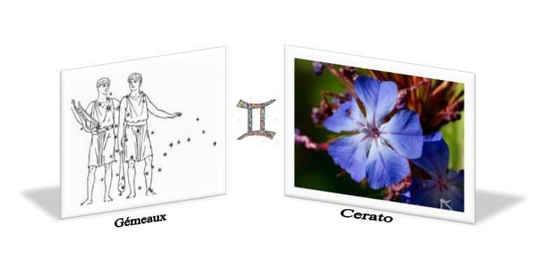 Cerato Fleurs de Bach et le signe astrologique les Gémeaux