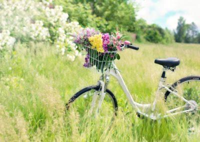 Le Journal des Fleurs de Bach - vélo-fleurs