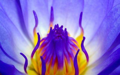 Fleurs de Bach et Pleine Conscience