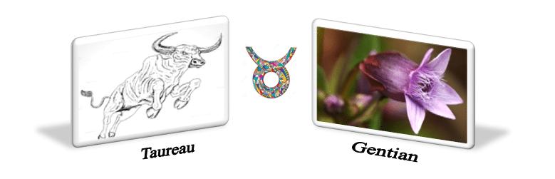 Fleurs de Bach et le signe du Capricorne