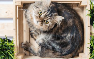 Le marquage urinaire chez le chat et les fleurs de Bach