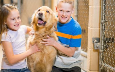 Adopter un chien et l'accueillir avec les fleurs de Bach